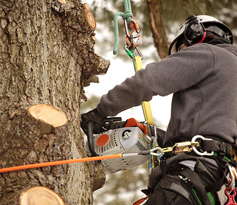 Martinez Texas Lawn Service employee cutting a tree down