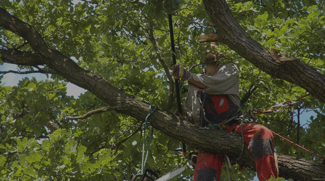 Martinez Texas Lawn Service: Tree cabling and bracing in San Antonio, Castle Hills and Helotes