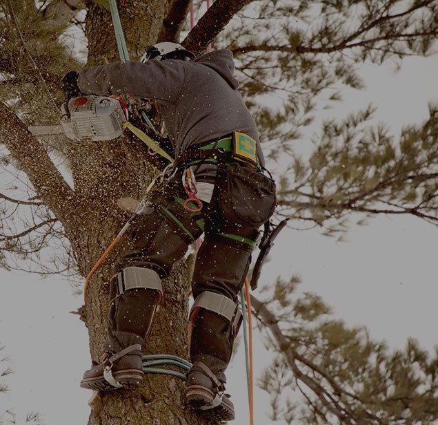 Martinez Texas Lawn Service: Tree health in San Antonio, Castle Hills and Helotes