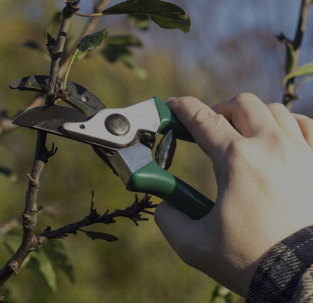 Martinez Texas Lawn Service: Tree pruning in San Antonio, Castle Hills and Helotes